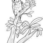 Bojanje stranice Macaw | Ptice papige