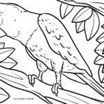 Bojanje stranice papiga | Ptice