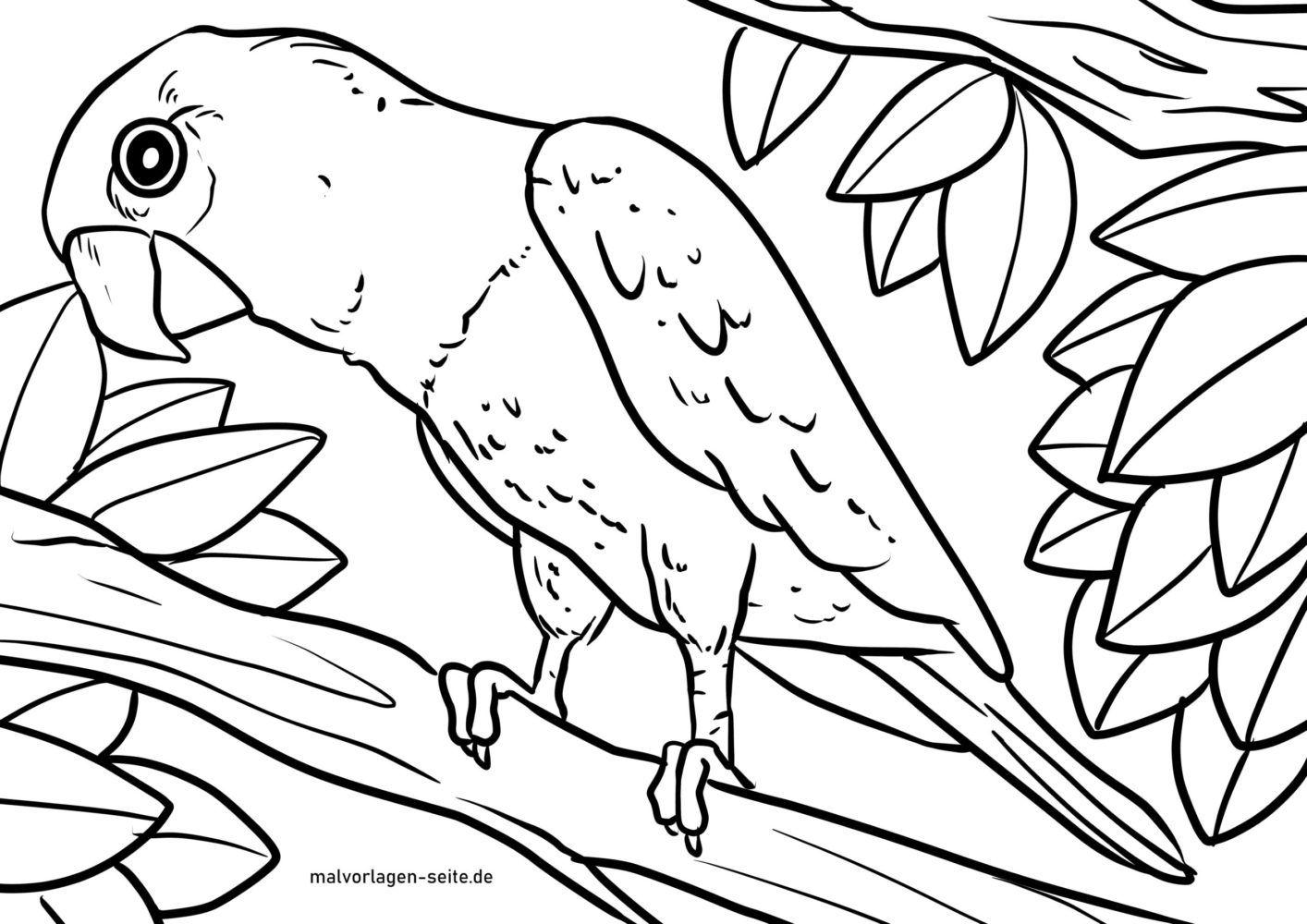 Malvorlage Papagei  Vögel - Kostenlose Ausmalbilder