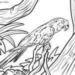 Stranica bojanje papiga ara | Ptice