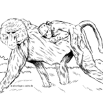 Coloring page baboon | Monkeys - wild animals