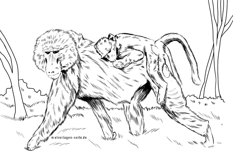 Coloring page baboon