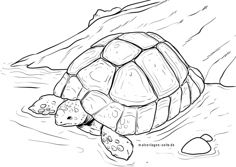 Coloring page turtle