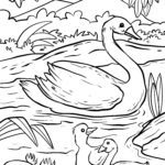 Swans coloring pages | swan