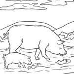 Coloriage cochon | ferme