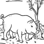 Coloring page pig | farm
