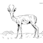 Boyama səhifəsi springbok