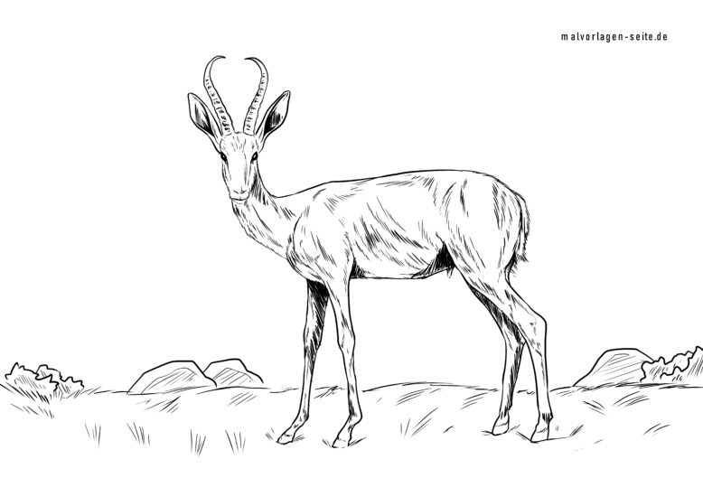 Bojanje stranice springbok