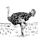 Coloring page ostrich | Birds