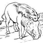 Omalovánky prase bradavičnaté