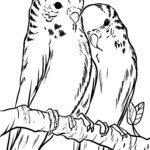 Coloring page budgies