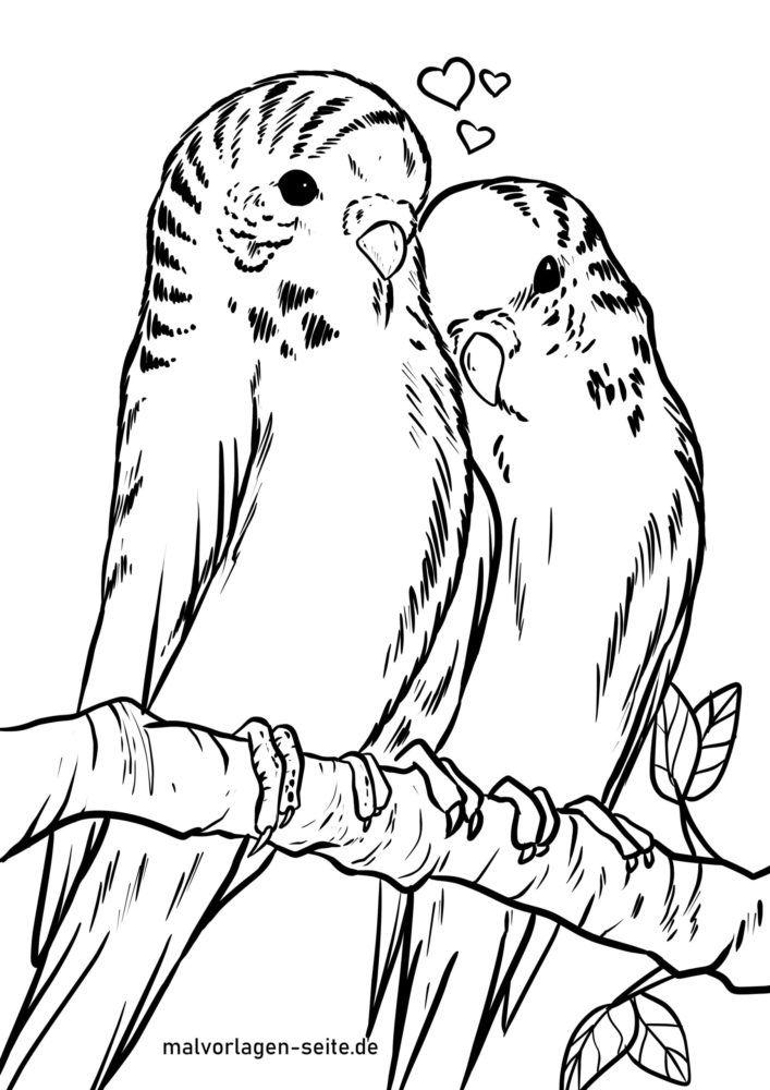 malvorlage wellensittiche  vögel  kostenlose ausmalbilder