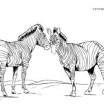 Boyama səhifəsi zebralar
