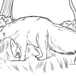 Coloring page anteater