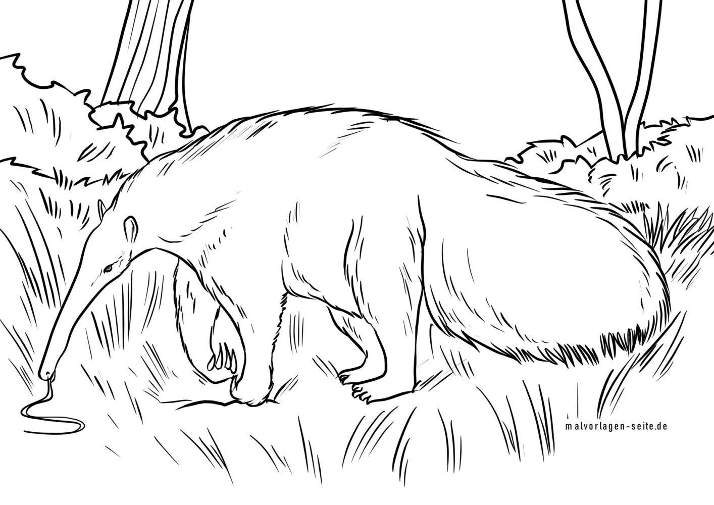 Dibujo para colorear oso hormiguero