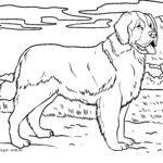 Halaman mewarnai Saint Bernard | anjing