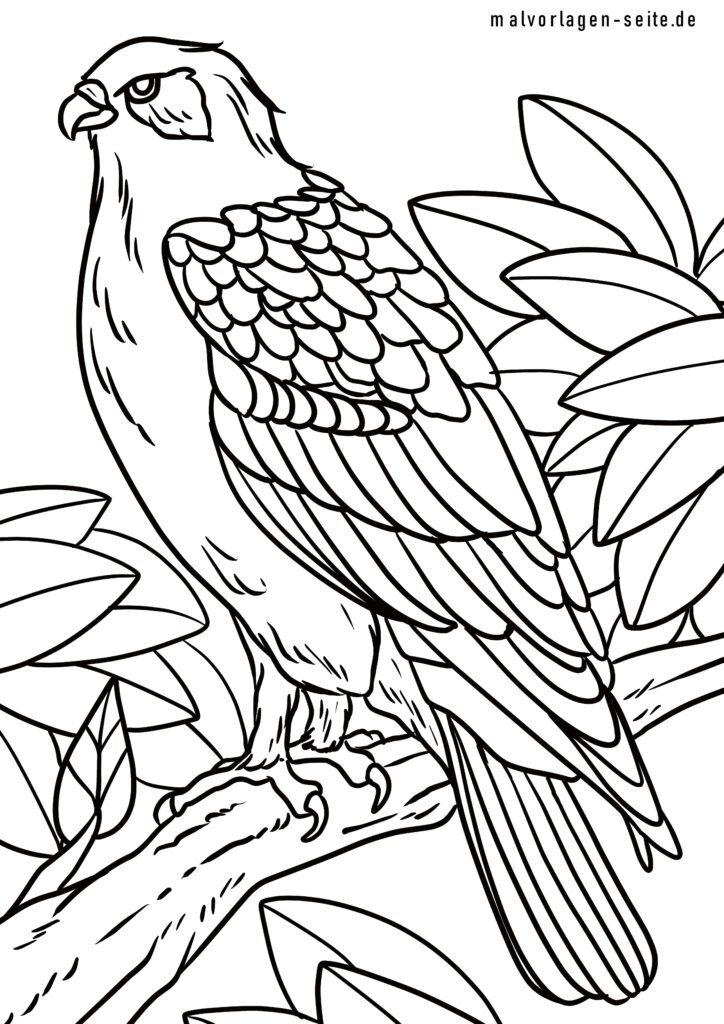 ausmalbilder greifvögel kostenlos herunterladen und ausmalen