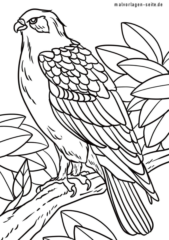Coloring page buzzard bird of prey