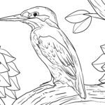 Coloring page kingfisher for coloring