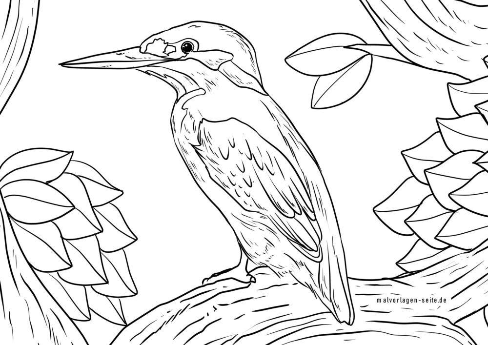 Värityskuva kingfisher väritykseen