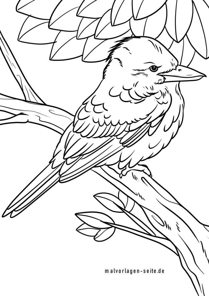 Tegninger til Farvelægning Jägerlieste / Kingfisher