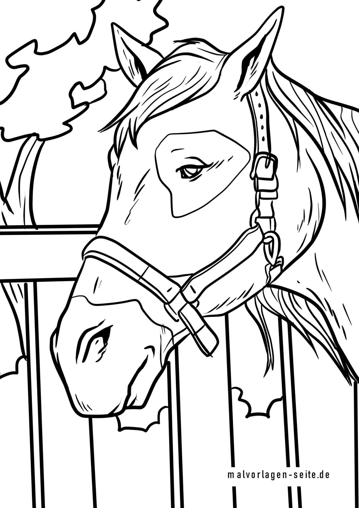 Värityskuva hevosen pää