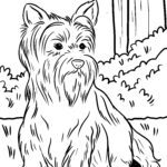 Coloring page Yorkshire Terrier | dogs
