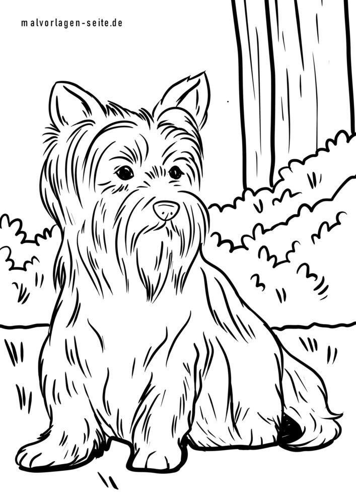 Coloring page Yorkshire Terrier
