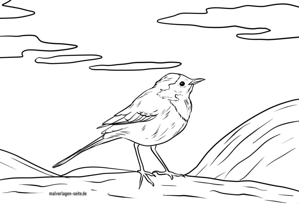 Coloring page wagtail