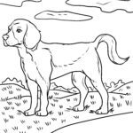 Coloring page Beagle | dogs