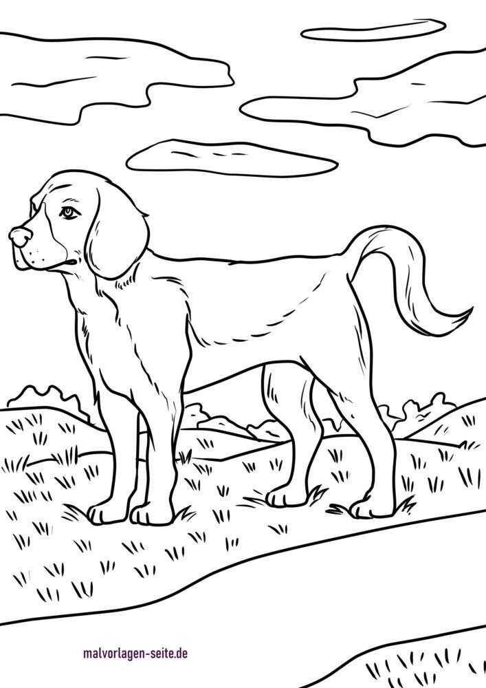 Coloriage beagle
