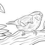 Coloring page bullfinch
