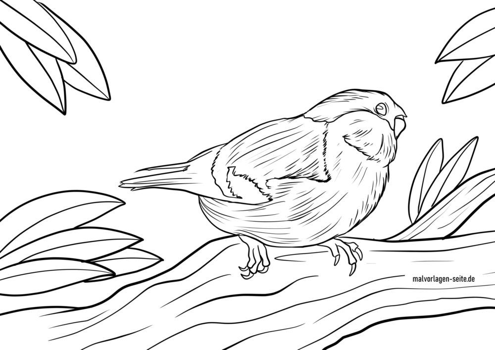Coloring page bullfinch