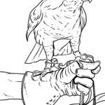Coloring page falcon bird of prey