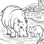Omalovánky hrochů Zvířata ve vodě