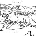 Malvorlage Garnelen im Wasser