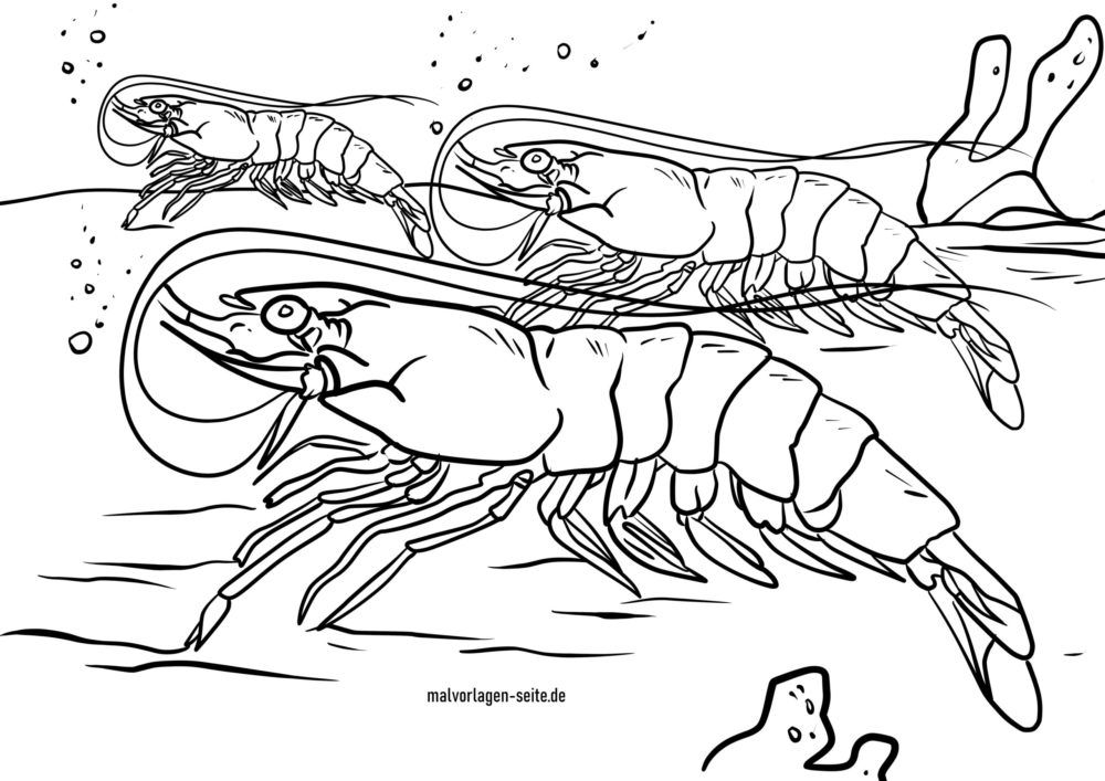 Coloring page shrimp in the water