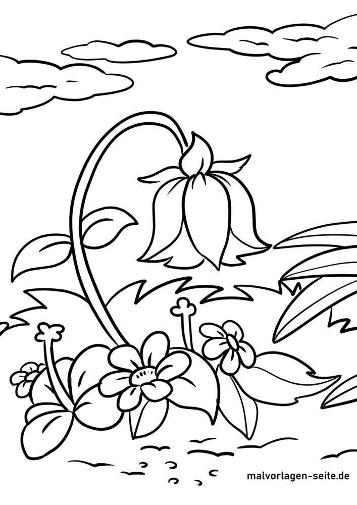 malvorlage glockenblume  blumen  kostenlose ausmalbilder