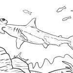 Coloring page hammerhead shark | Sharks