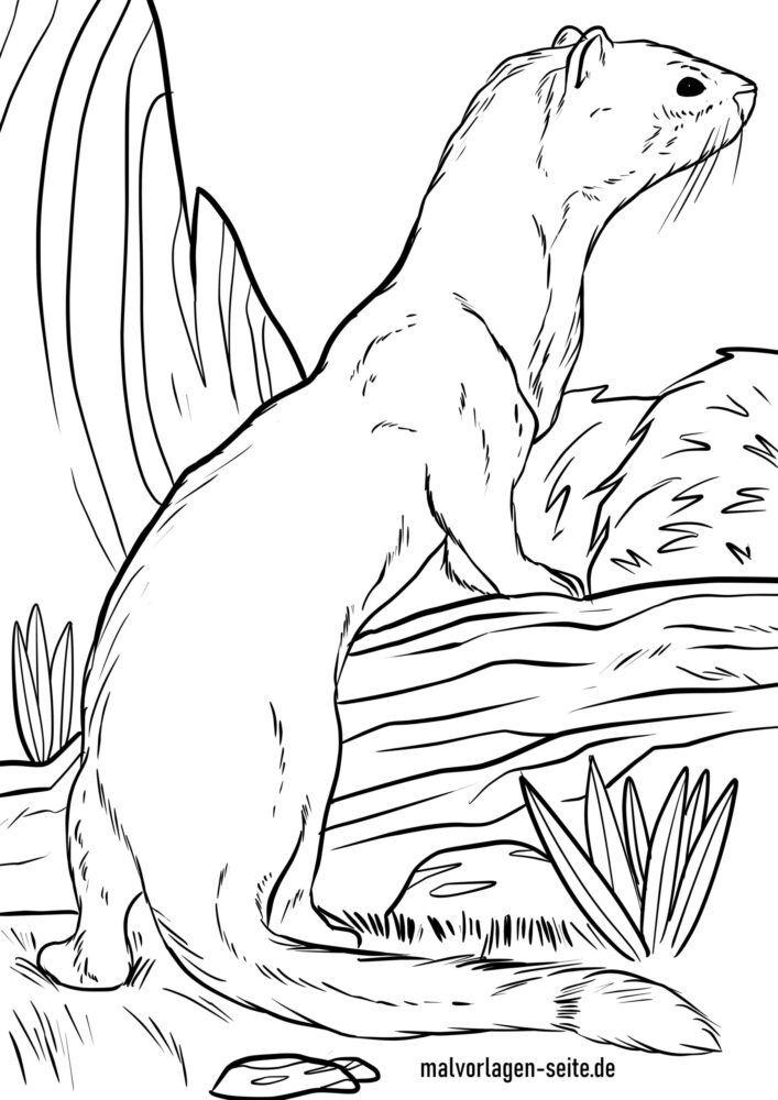 Omalovánky hermelín