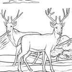 Coloring page deer | Animals in the forest