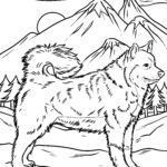 Coloring page Huskey | dogs