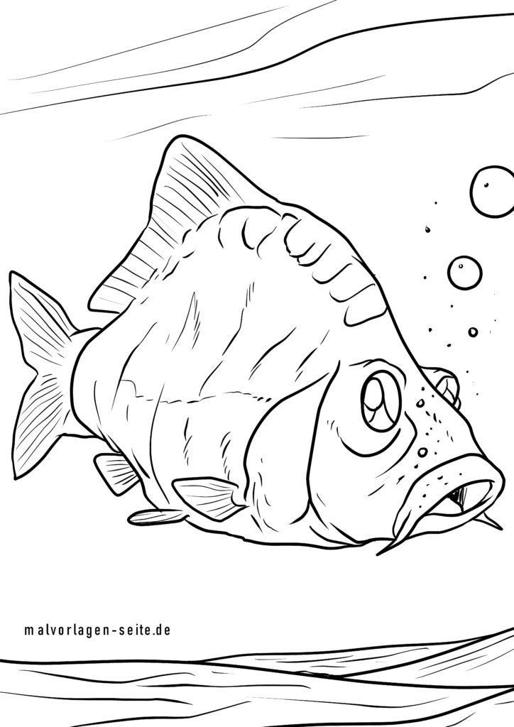 malvorlage karpfen  fische  kostenlose ausmalbilder