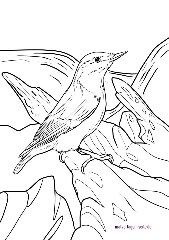 Coloring page nuthatch