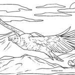 Orrialde koloreztatzailea Kondor
