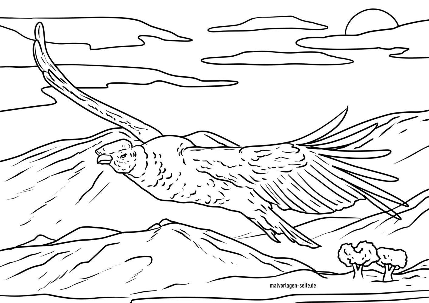 Värityskuva condor