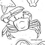 Farvebillede krabbe