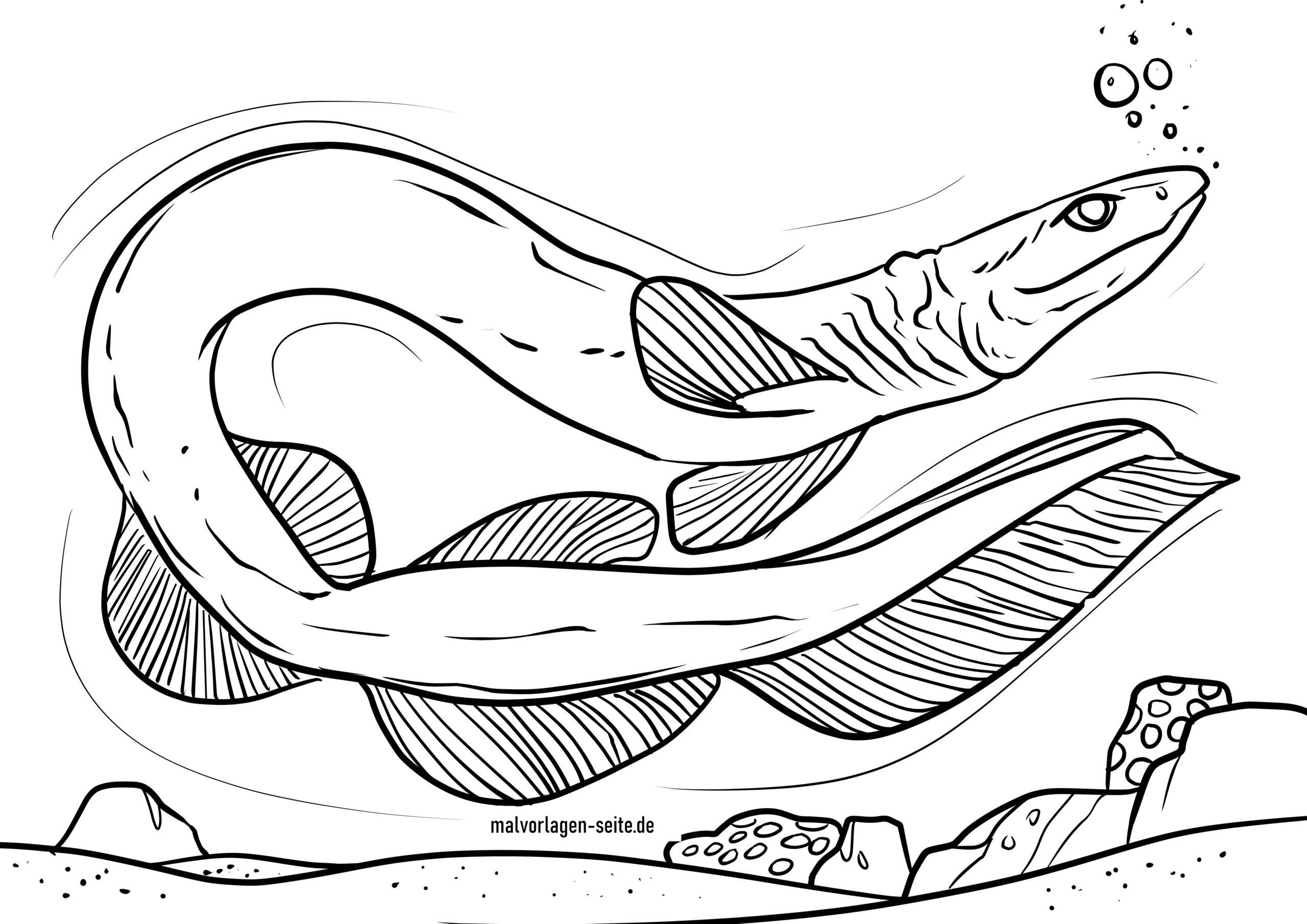 Bojanje stranice ovratnik morski pas | Morski psi