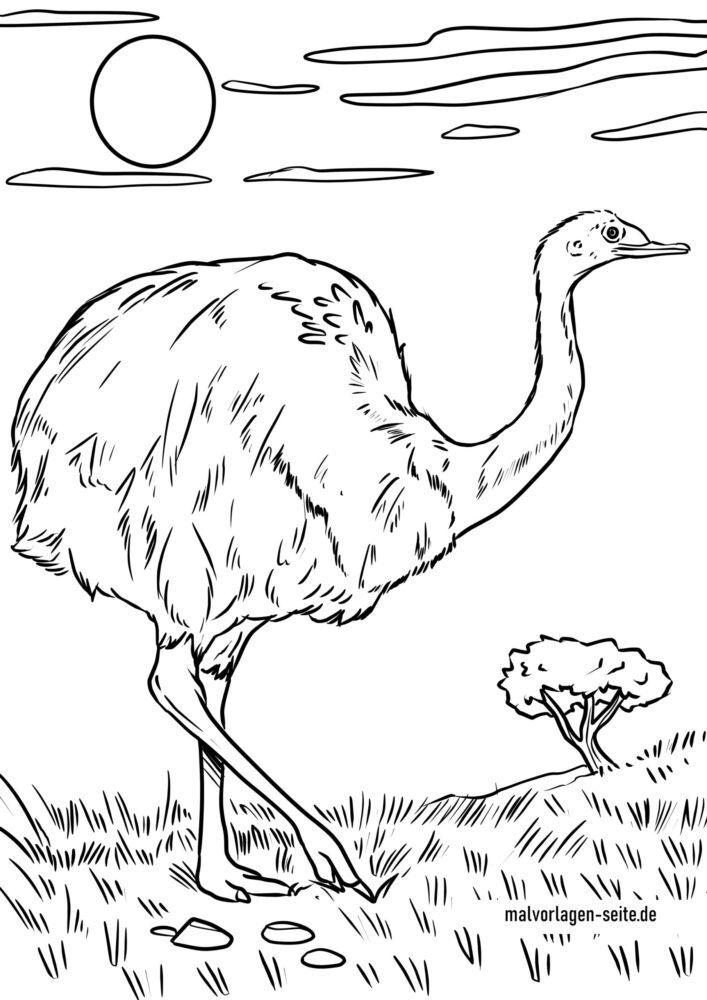 Dibujo para colorear rhea