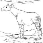 Boyama səhifəsi okapi